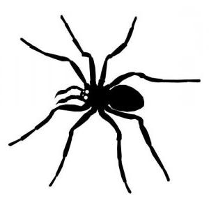 Spinne allgemein